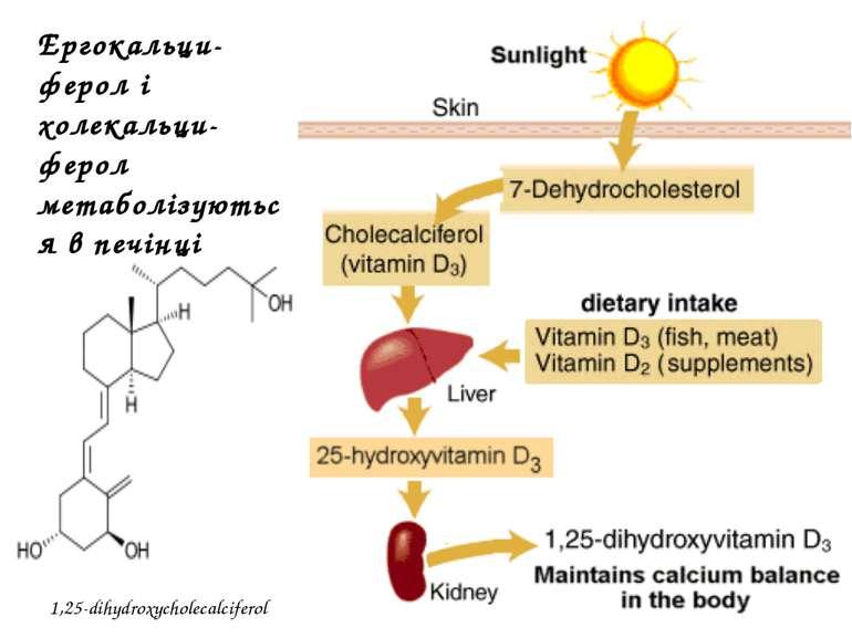 1,25-dihydroxycholecalciferol Ергокальци-ферол і холекальци-ферол метаболізую...