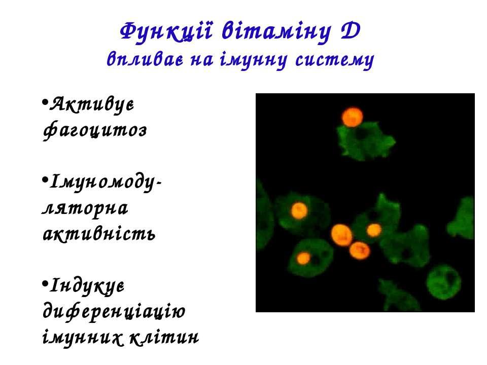 Активує фагоцитоз Імуномоду-ляторна активність Індукує диференціацію імунних ...