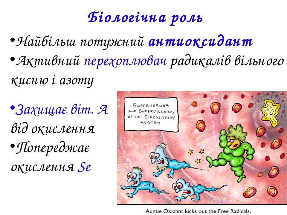 Біологічна роль Найбільш потужний aнтиоксидант Активний перехоплювач радикалі...