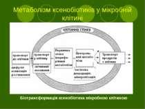 Метаболізм ксенобіотиків у мікробній клітині Біотрансформація ксенобіотика мі...
