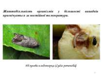 * Життєдіяльність організмів у більшості випадків пригнічується за постійної ...