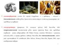 * осмоконформісти (майже всі морські безхребетні, а з хребетних – міксини) є ...