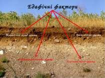 * Едафічні фактори Механічний склад грунту Повітропроникність грунту Кислотні...