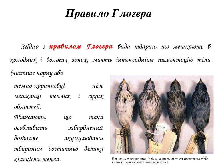 Правило Глогера Згідно з правилом Глогера види тварин, що мешкають в холодних...