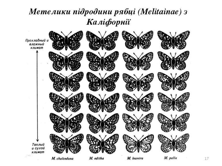 Метелики підродини рябці (Melitainae) з Каліфорнії *