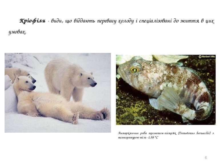 * Антарктична риба трематом-пістряк (Trematomus bernacchii) з температурою ті...