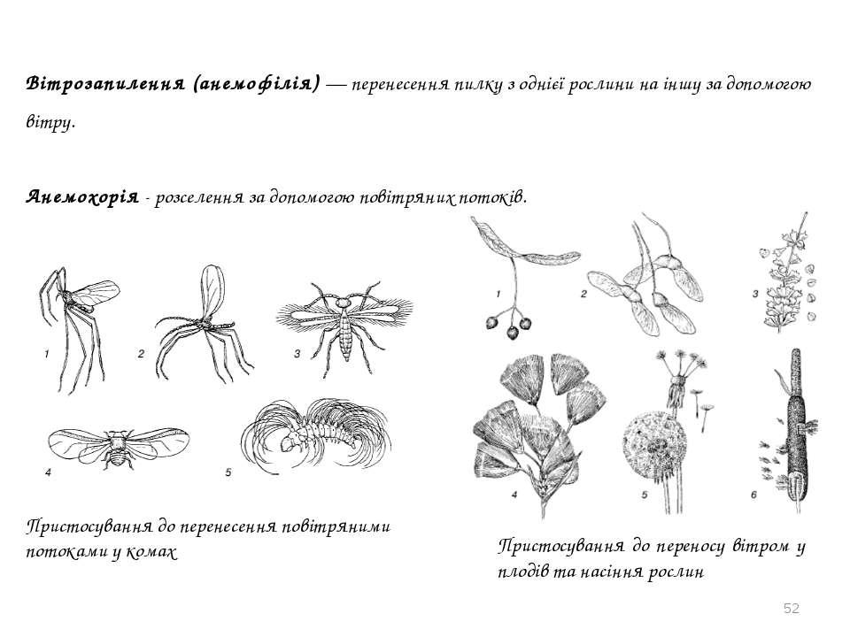 * Вітрозапилення (анемофілія) — перенесення пилку з однієї рослини на іншу за...