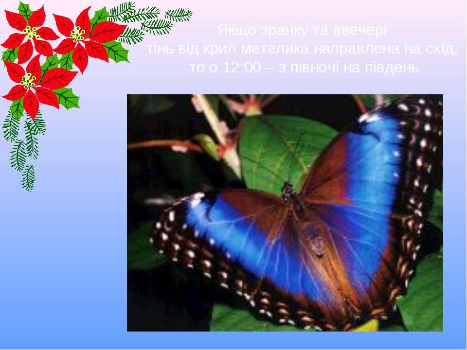 Якщо зранку та ввечері тінь від крил метелика направлена на схід, то о 12:00 ...