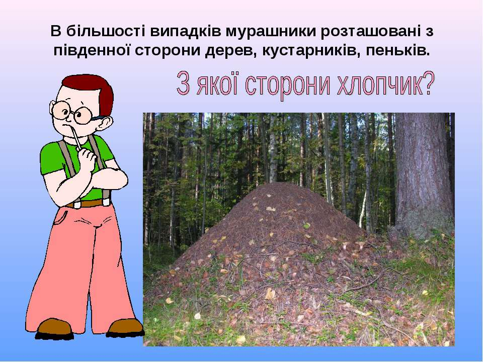 В більшості випадків мурашники розташовані з південної сторони дерев, кустарн...