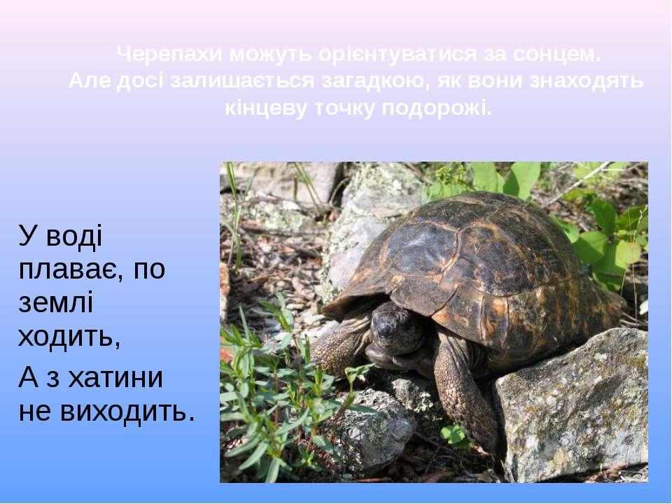 У воді плаває, по землі ходить, А з хатини не виходить. Черепахи можуть орієн...