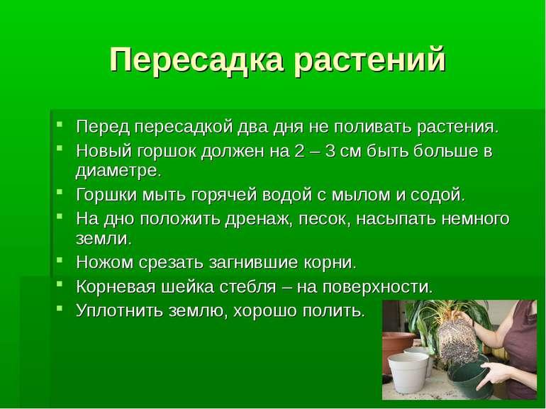 Пересадка растений Перед пересадкой два дня не поливать растения. Новый горшо...