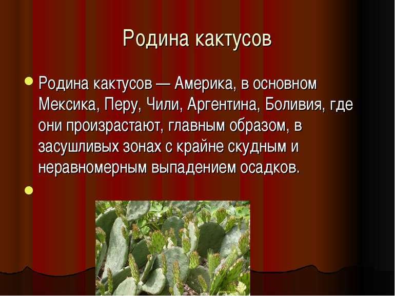 Родина кактусов Родина кактусов — Америка, в основном Мексика, Перу, Чили, Ар...