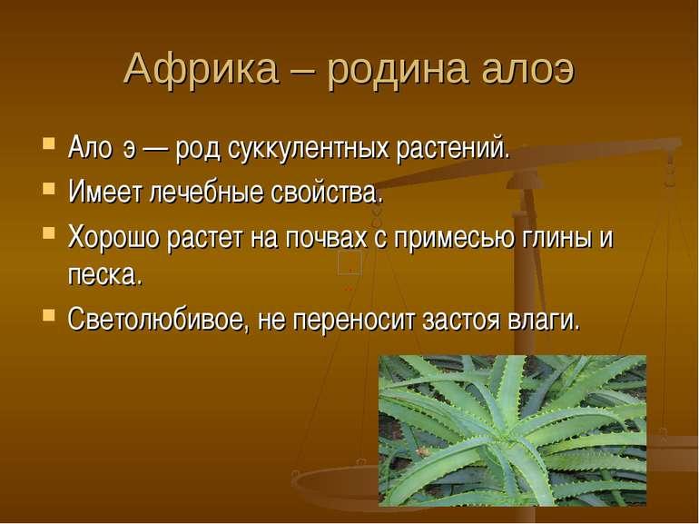 Африка – родина алоэ Ало э — род суккулентных растений. Имеет лечебные свойст...