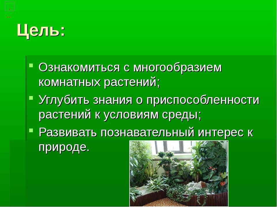 Цель: Ознакомиться с многообразием комнатных растений; Углубить знания о прис...