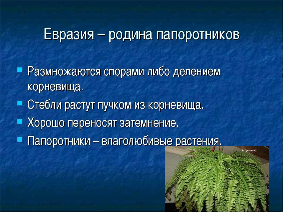 Евразия – родина папоротников Размножаются спорами либо делением корневища. С...