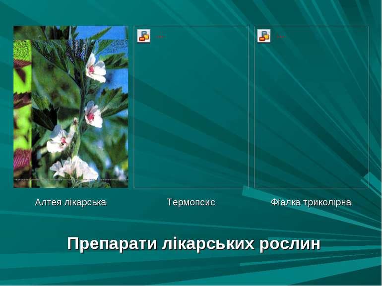 Препарати лікарських рослин Алтея лікарська Термопсис Фіалка триколірна