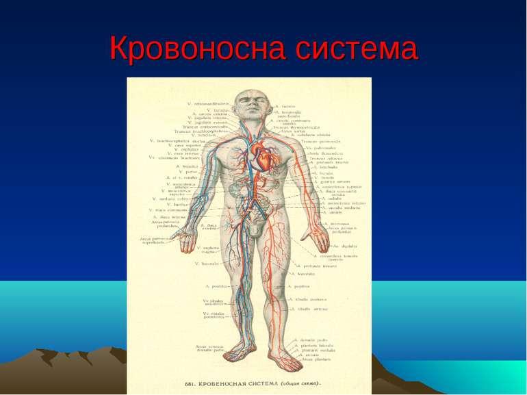 Кровоносна система