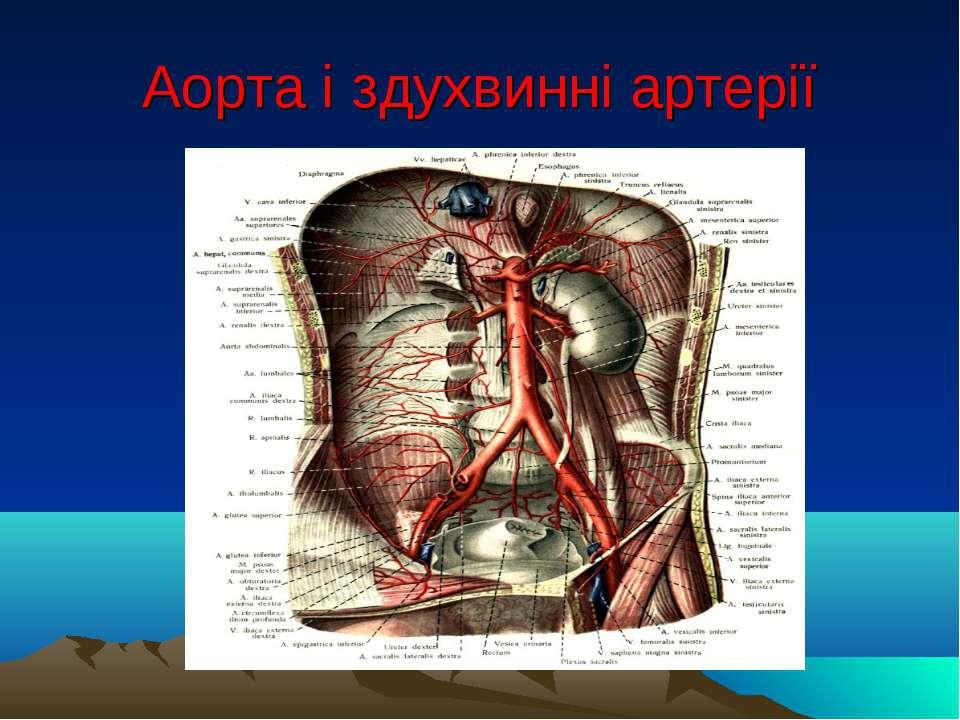 Аорта і здухвинні артерії