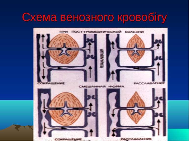 Схема венозного кровобігу