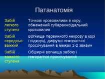 Патанатомія