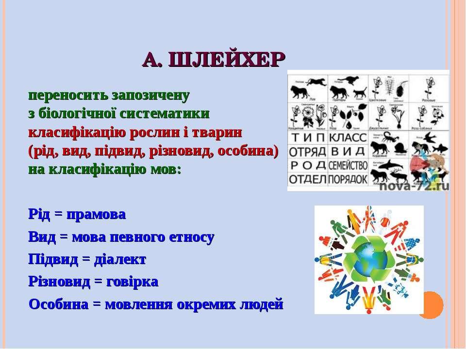 А. ШЛЕЙХЕР переносить запозичену з біологічної систематики класифікацію росли...