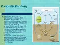 Колообіг Карбону Карбон - складова усіх органічних речовин, його колообіг пов...
