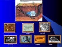 Кроти Хробаки Nemotode (глисти) Грибки коренів рослин Амеба Бактерії Кліщі