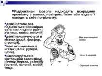 деякі ізотопи роз поділяються рівномірно в організмі людини (тритій, вуглець,...