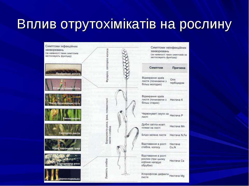Вплив отрутохімікатів на рослину