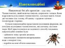 Павукоподі бніабо арахніди – клас типу Членистоногих, який включаєпавуків, ...