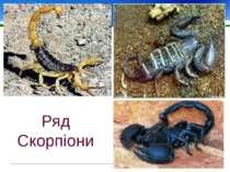 Ряд Скорпіони