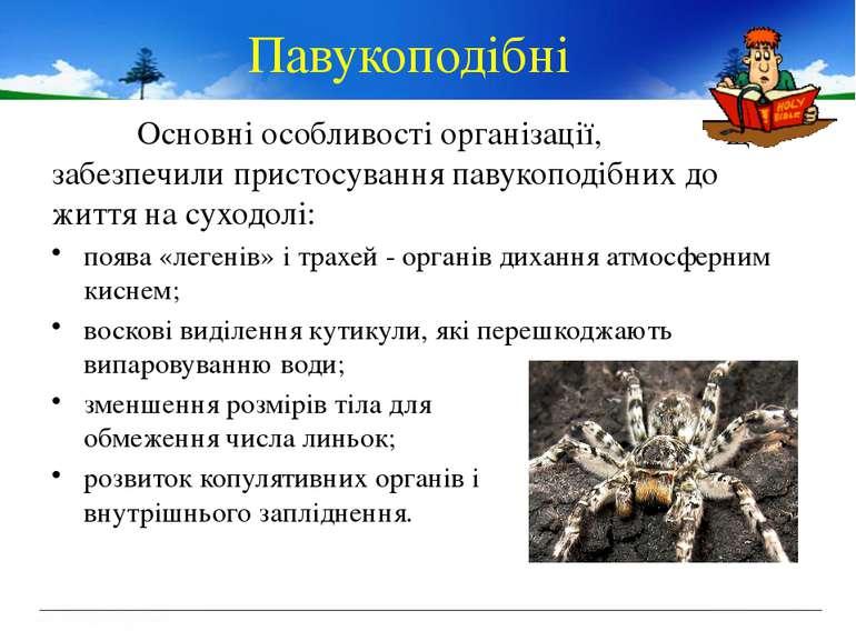 Основні особливості організації, що забезпечили пристосування павукоподібних ...