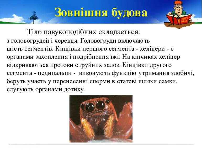 Зовнішня будова Тіло павукоподібних складається: зголовогрудейічеревця.Го...