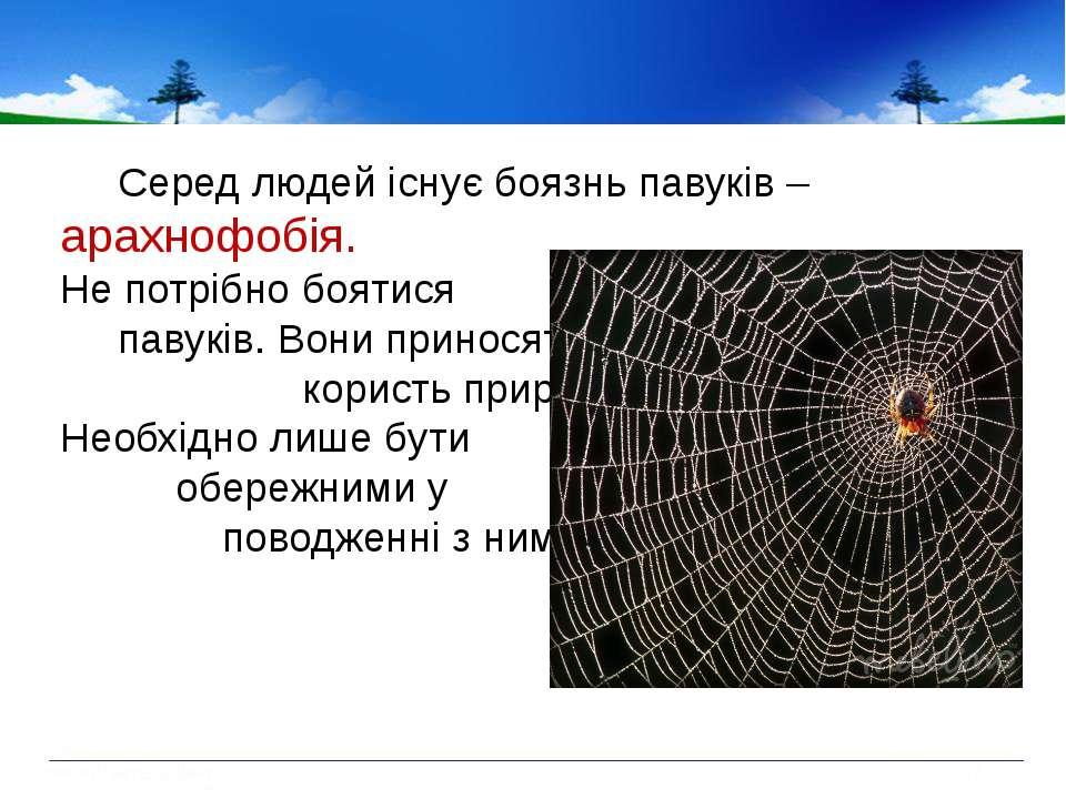 Серед людей існує боязнь павуків – арахнофобія. Не потрібно боятися павуків. ...