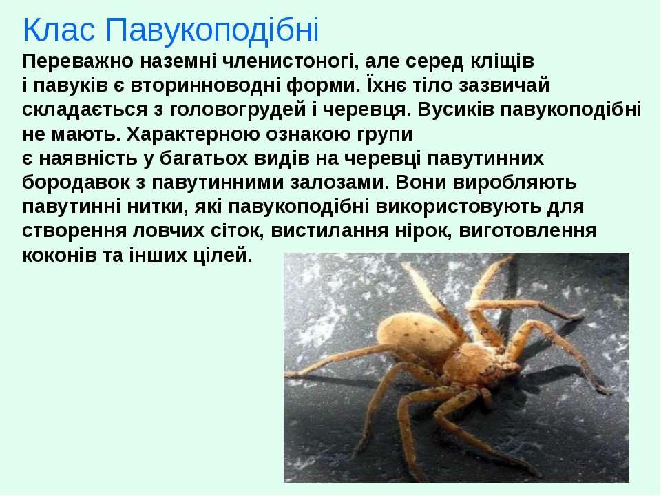 Клас Павукоподібні Переважно наземні членистоногі, але серед кліщів і павуків...