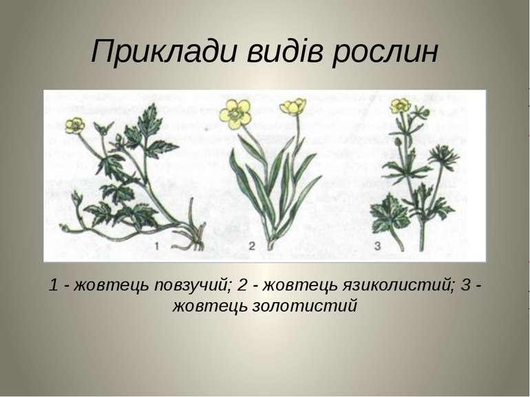 Приклади видів рослин 1 - жовтець повзучий; 2 - жовтець язиколистий; 3 - жовт...