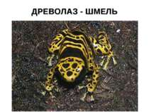 ДРЕВОЛАЗ - ШМЕЛЬ