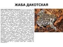 ЖАБА ДАКОТСКАЯ ЖАБА ДАКОТСКАЯ (Bufo hemiophrys) Почти вся популяция этих жаб ...