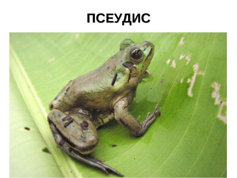 ПСЕУДИС