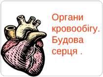 Органи кровообігу.Будова серця .