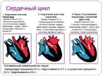 Сердечный цикл 2. Скорочення (систола) шлуночків Триває близько 0.3 с. Передс...