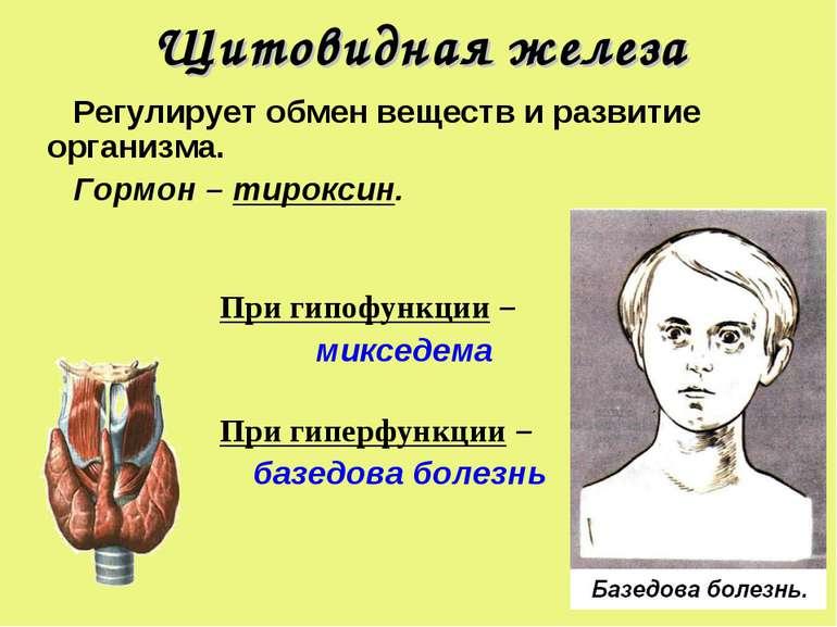Щитовидная железа Регулирует обмен веществ и развитие организма. Гормон – тир...