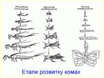 Етапи розвитку комах