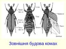Зовнішня будова комах