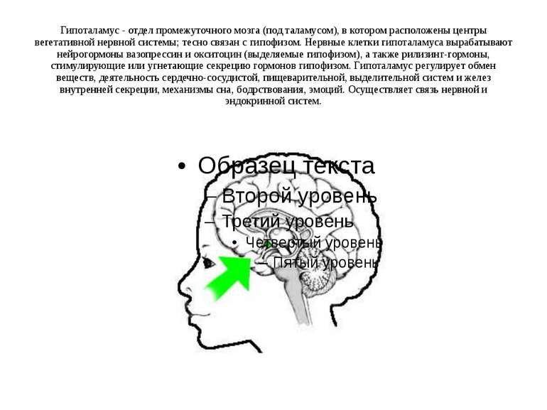 Гипоталамус - отдел промежуточного мозга (под таламусом), в котором расположе...
