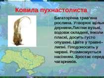 Ковила пухнастолиста Багаторічна трав'яна рослина. Утворює щільні дернини.Лис...