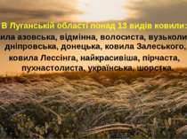 В Луганській області понад 13 видів ковили: ковила азовська, відмінна, волоси...