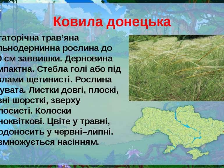 Ковила донецька Багаторічна трав'яна щільнодернинна рослина до 100 см заввишк...