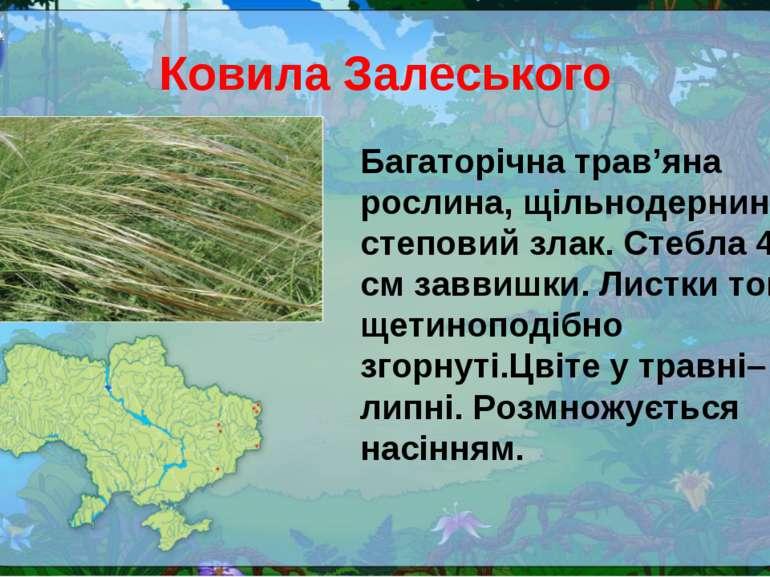Ковила Залеського Багаторічна трав'яна рослина, щільнодернинний степовий злак...