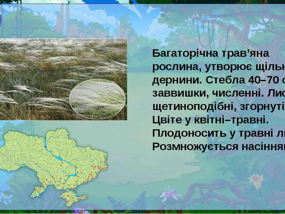 Багаторічна трав'яна рослина, утворює щільні дернини. Стебла 40–70 см заввишк...